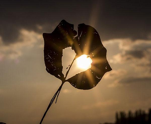 Hjerte i høstblad